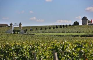 Les secrets de la vigne & du vin