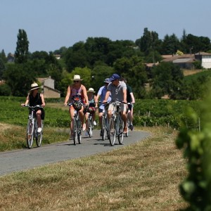 One day bike tour in the vineyard