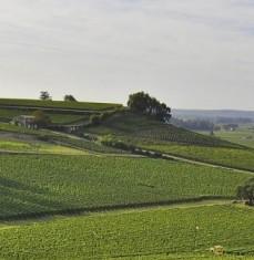 Vignoble et Vins de Saint Emilion