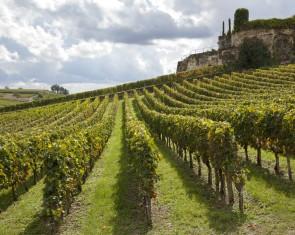 La Ruta del Vino de Burdeos en Saint-Émilion, Pomerol, Fronsac