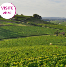 The wines and vineyards of Saint Emilion