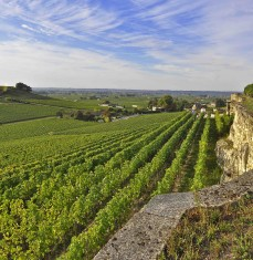 Saint-Emilion vineyard - private tour