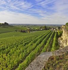 Vignoble de Saint-Émilion - visite privée
