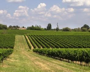 Syndicat Viticole Francs Côtes de Bordeaux