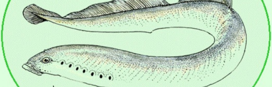 Fête de la lamproie