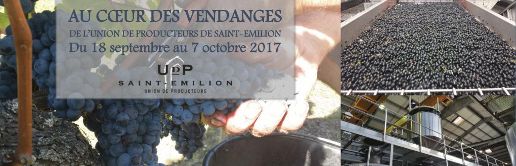 Visite avec l'Union des Producteurs de Saint-Emilion au cœur des vendanges